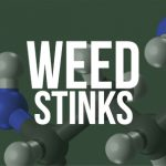 Weed Stinks: The Aroma of Marijuana (THC/CBD Research)